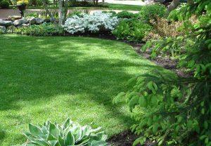 Благоустройство территории и озеленение
