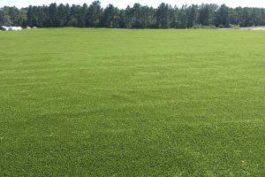 Рулонные газоны на поле