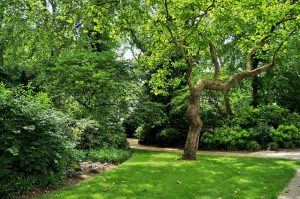 Озеленение и благоустройство территории